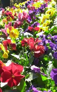 花いっぱい運動①